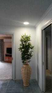 Solar Light Whiz positioned over a pot plant